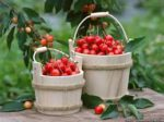 Savings and cherry preservation